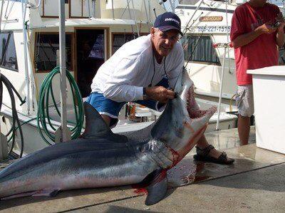 shark4